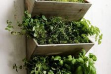 36 indoor herb garden with several sections