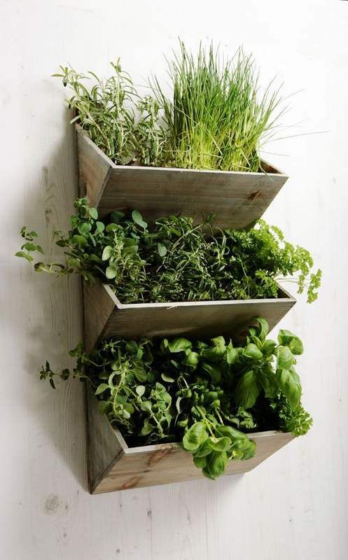 indoor herb garden with several sections