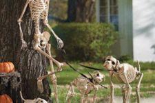 skeleton arrangement