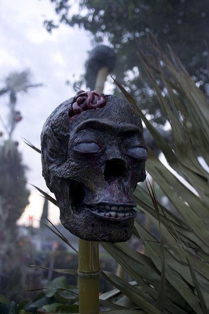 very scary and realistic zombie skulls for tropics