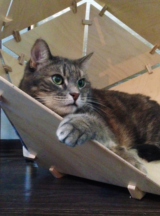 Let your cat feel comfortable in its new stylish bed