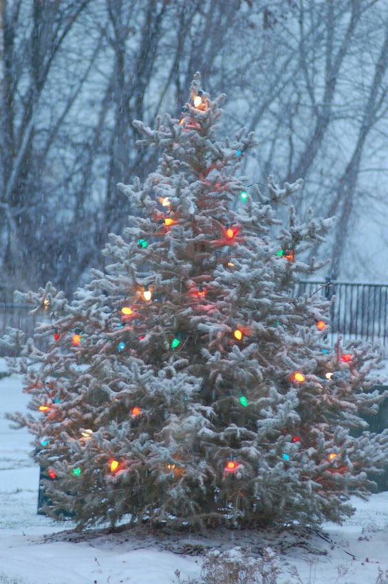 snowy real Christmas tree with vintage lights