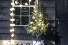 11 small potted tree with star-shaped lights
