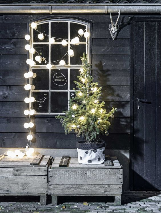 small potted tree with star shaped lights