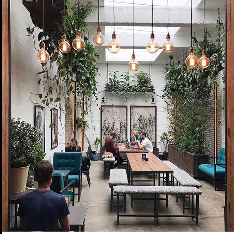 greenery and industrial lights is an interesting mix to make the a creative environment