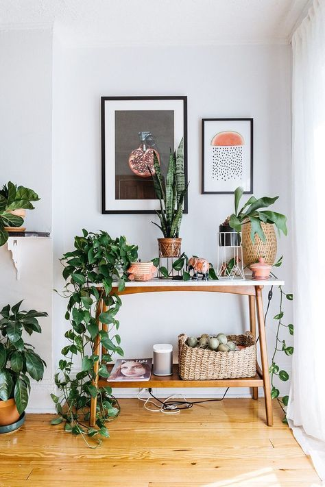 various greenery and ficuses in cute wooden and woven pots refresh the interior