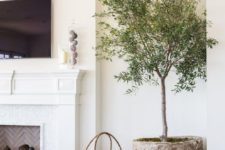 17 a potted olive tree in a rusty concrete planter for a living room