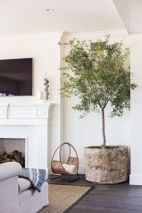 a potted olive tree in a rusty concrete planter for a living room