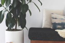21 adorable large rubber tree in a planter to add a refined chic