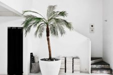 22 beach entryway with a large palm tree in a planter