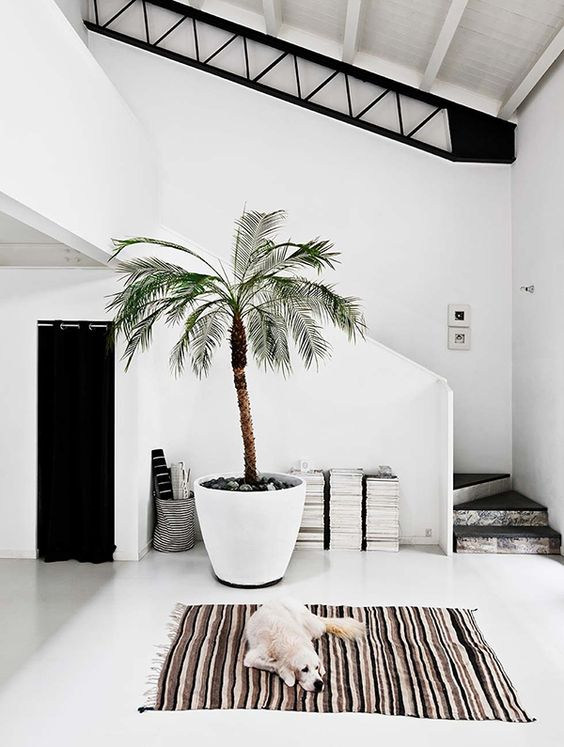 beach entryway with a large palm tree in a planter