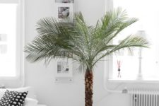 24 palm trees are popular for any space, they are rather easy to maintain and look wow