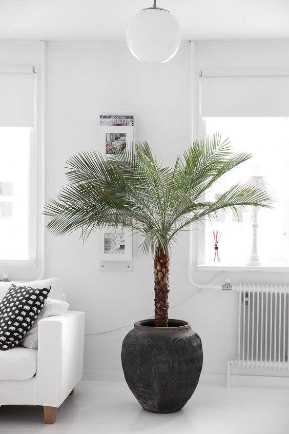 palm trees are popular for any space, they are rather easy to maintain and look wow