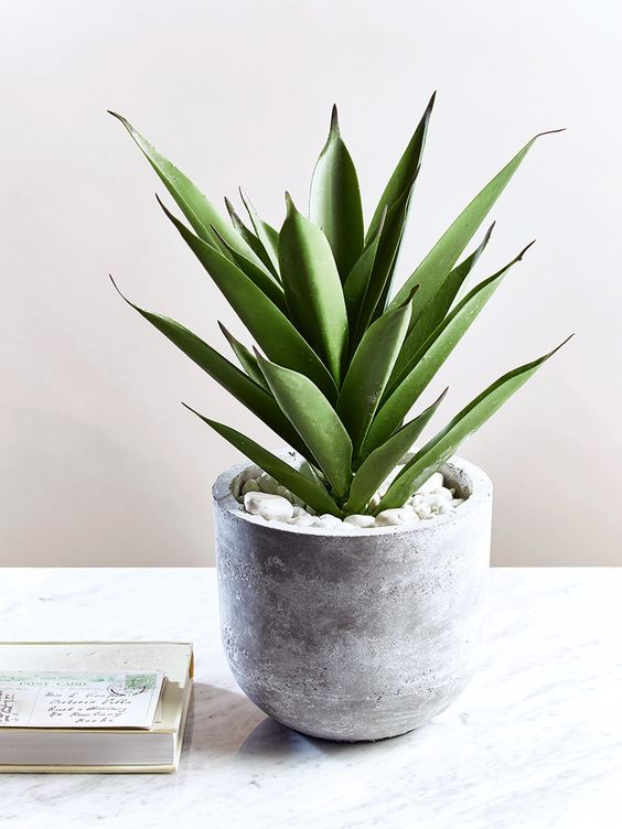 concrete succulent pot is a trendy piece to make