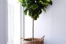 28 a basket planter is an easy way to add coziness and a rustic feel to the space