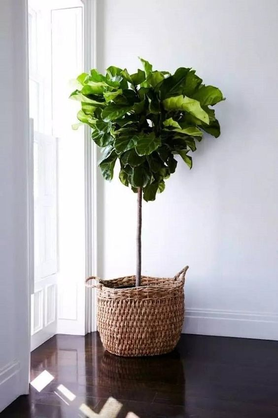 a basket planter is an easy way to add coziness and a rustic feel to the space