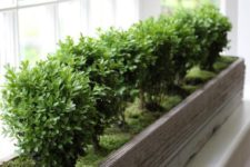 30 shabby chic window box covered with moss and with same type of plants