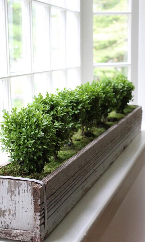 shabby chic window box covered with moss and with same type of plants