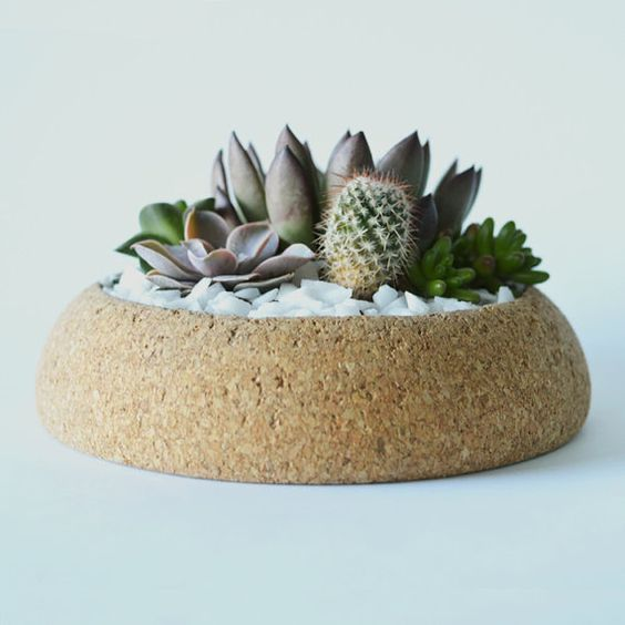 large cork planter with succulents and cacti