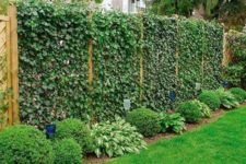 28 wooden fence completely covered with greenery is a nice idea to enliven your outdoors