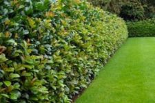 29 amazing thick greenery living fence for your outdoor space