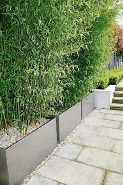 modern planters with some very thick greenery can work instead of a privacy fence