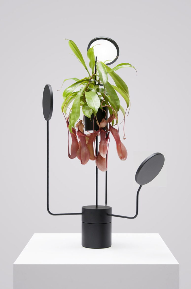 Viride Tres is a hanging planter with lights, it may be rotated, an ideal piece for capricious plants