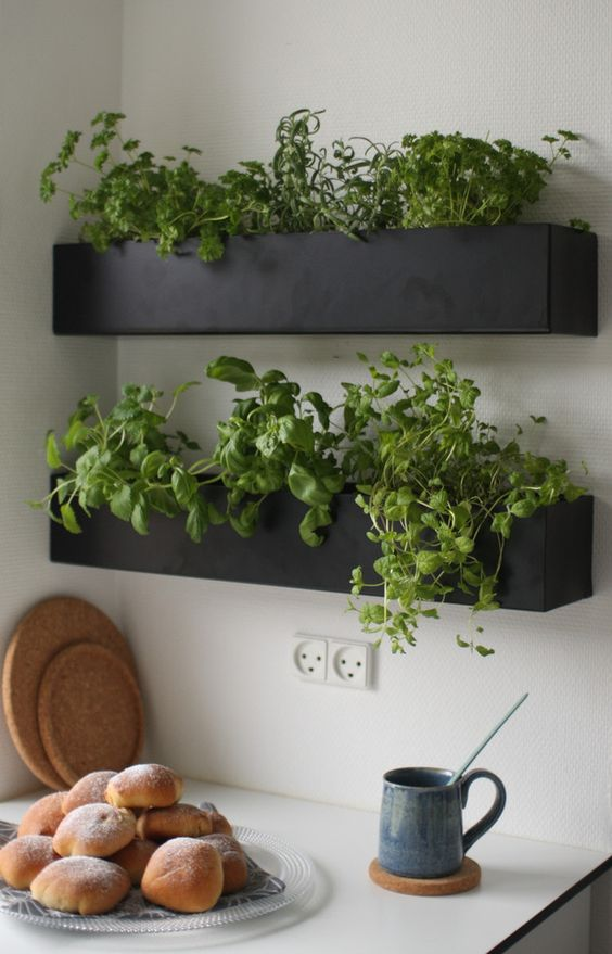 stylish modern chalkboard wall planters with fresh herbs