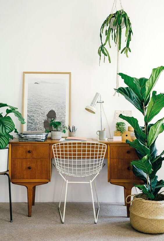 a hanging cactus over the desk and more plants make it super fresh