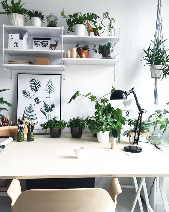 some potted plants make this workspace inviting