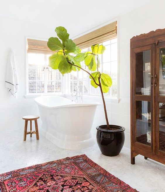 a large potted plant makes this space more chic