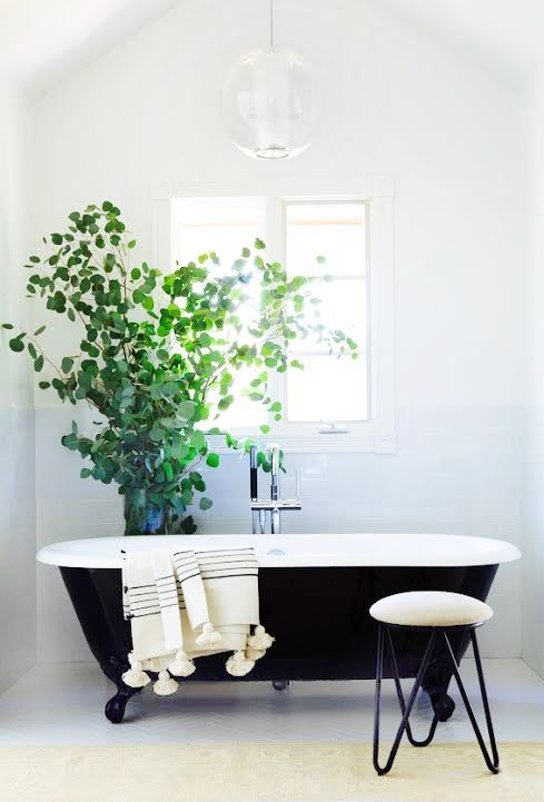 a black and white vintage-inspired bathroom with a large potted plant looks alive