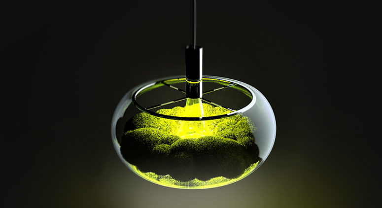 The Mosslamp is a unique piece with a living moss plant inside