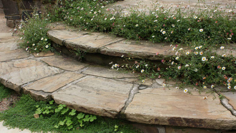 There are just few flowers - these small ones in between the garden steps to fill the garden with freshness