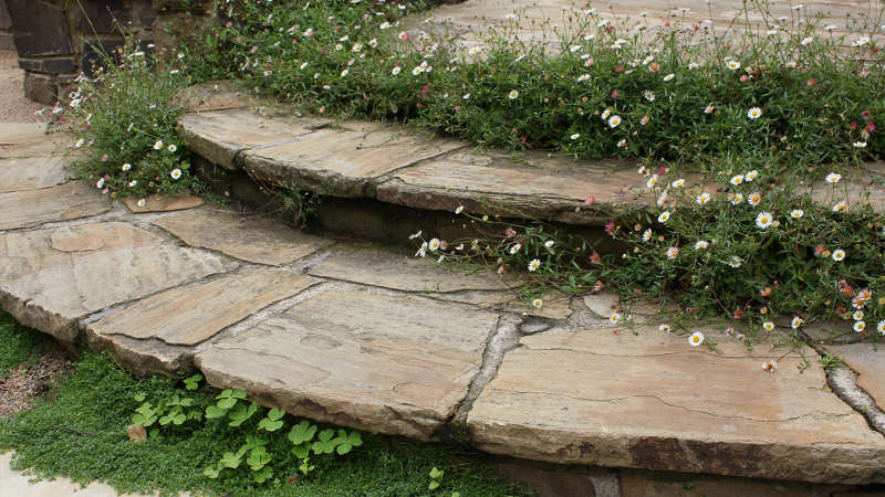 There are just few flowers   these small ones in between the garden steps to fill the garden with freshness