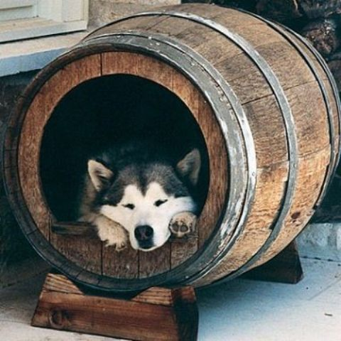 make a cool manly dog bed out of a wine barrel, your pet will love it
