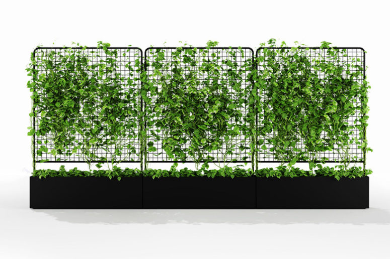 Waratah is utilitarian in nature, allowing people to create a straight wall of greenery