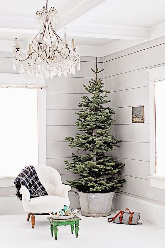 a huge tree with no decor in a galvanized bucket looks truly farmhouse-like