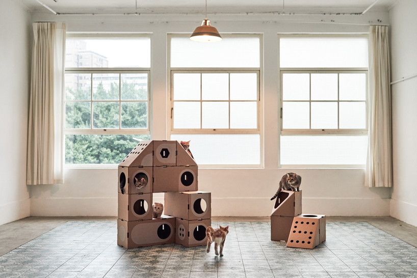 Build various arrangements according to the feline needs and their behavior