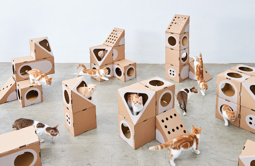 The pieces of the series will accomodate both giant cats and small kitties easily