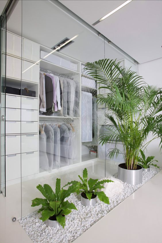 a minimalist closet done with white with glass walls and fresh potted greenery
