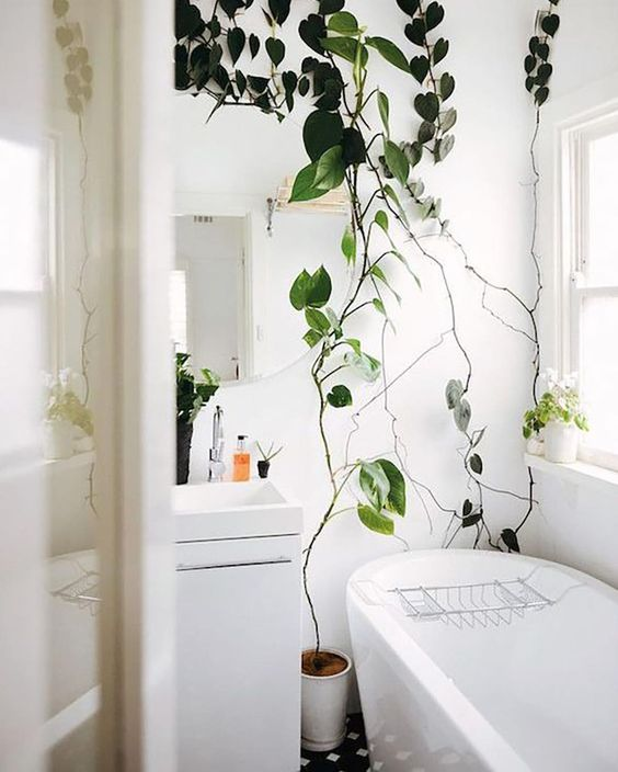 climbing plants will refresh your bathroom and make it feel like a space