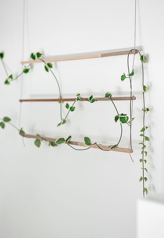 such a simple and minimalist trellis can be hung anywhere to show off a climbing plant and refresh the space