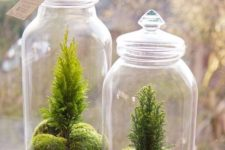 26 tiny cypress and moss terrariums in jars are amazing for fresh spring decor