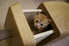 07 Your pets are sure to love these drawers, they are cozy and secluded