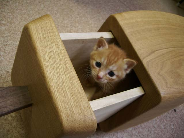 Your pets are sure to love these drawers, they are cozy and secluded