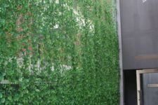 18 a gorgeous privacy screen with lots of greenery coming up is ideal to make your outdoor space fresh and hide you from the neighbors