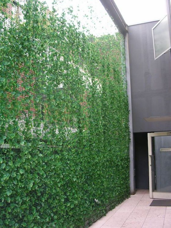a gorgeous privacy screen with lots of greenery coming up is ideal to make your outdoor space fresh and hide you from the neighbors