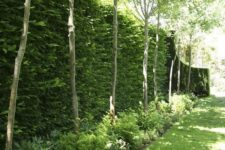 21 a lush green living wall with greenery and trees next to it for a fresh outdoor look