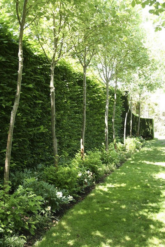 a lush green living wall with greenery and trees next to it for a fresh outdoor look